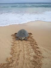 tortuga Fábula de la Liebre y la Tortuga o cómo potenciar las capacidades de su equipo