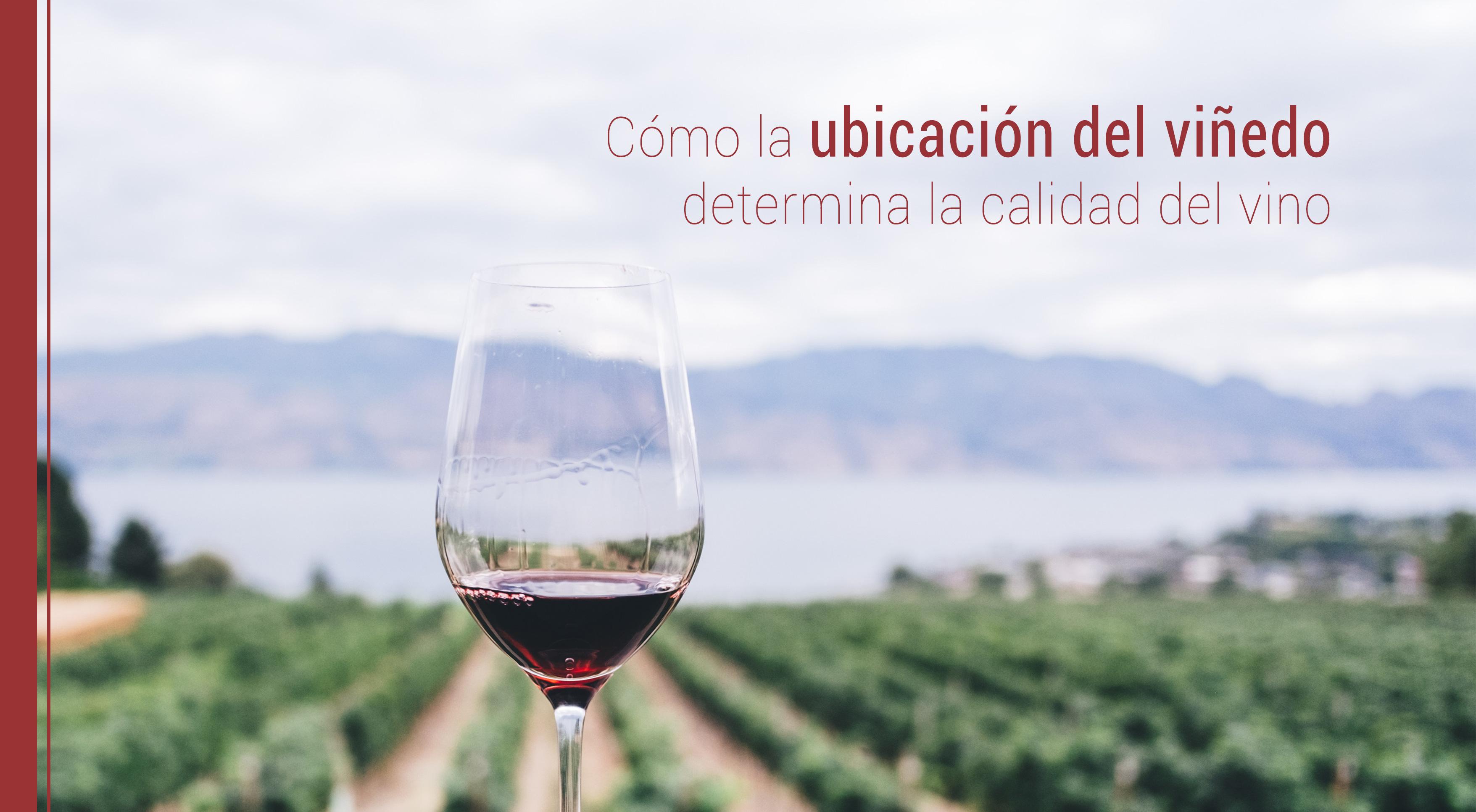 ubicacion-vinedo-calidad-del-vino Cómo la ubicación del viñedo determina la calidad del vino