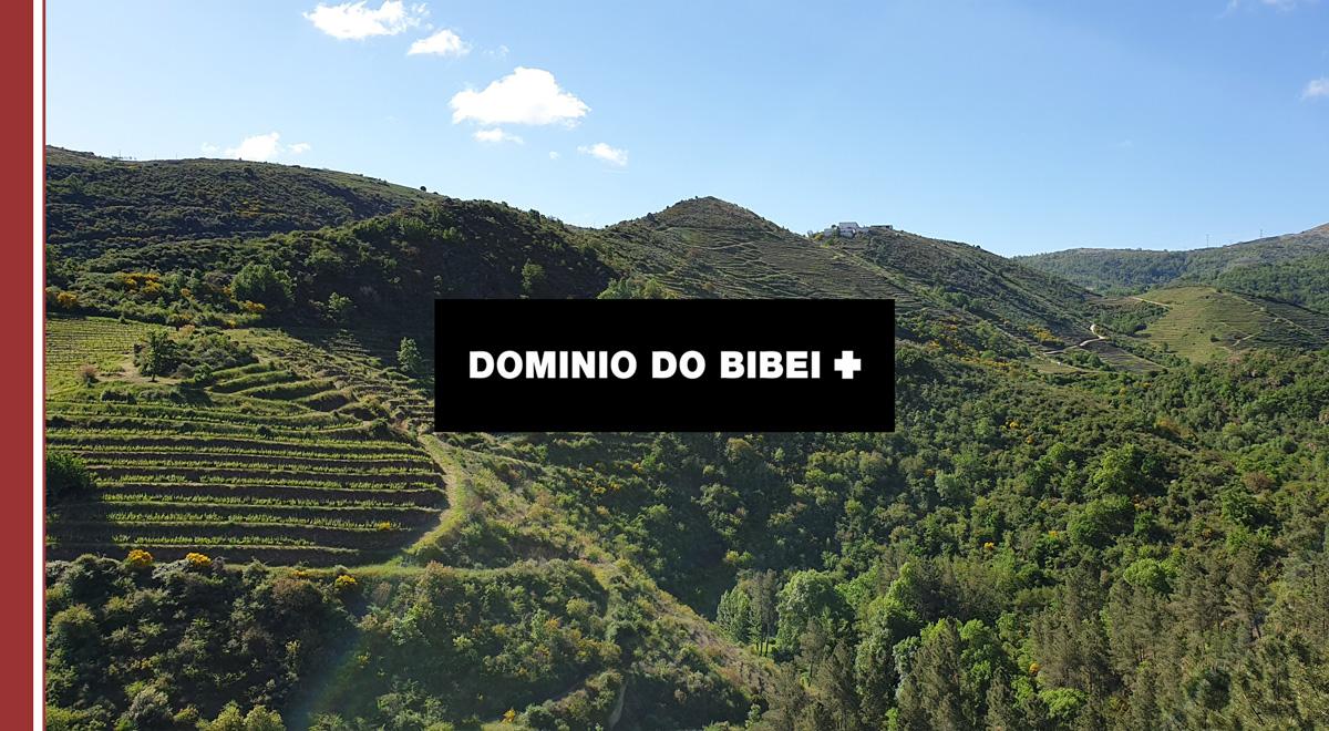 dominio-do-bibei IMF descubre la calidad y singularidad en los vinos de Dominio do Bibei