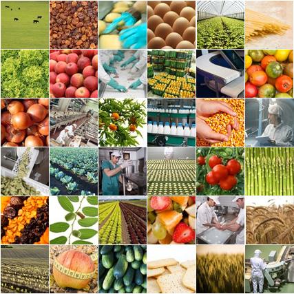 composicion La vida útil de los alimentos