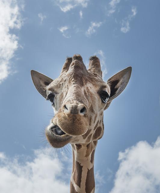 giraffe-556893_640 Inteligencia: un activo que se cultiva