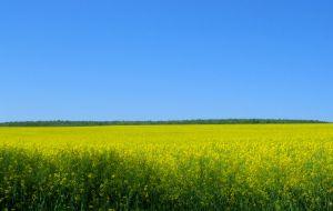 Nueva Circular para el uso de los biocarburantes en España
