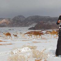 Camellos en la nieve y sombrillas en Alaska