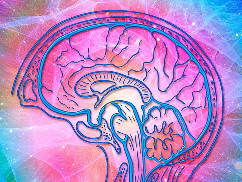 inteligencia-emocional-prl-800x600 La inteligencia emocional consagrada a la prevención de riesgos laborales
