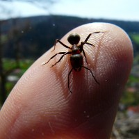 red-wood-ant-4398_640-200x200 La hormiga sin patas; la estrategia en RRHH