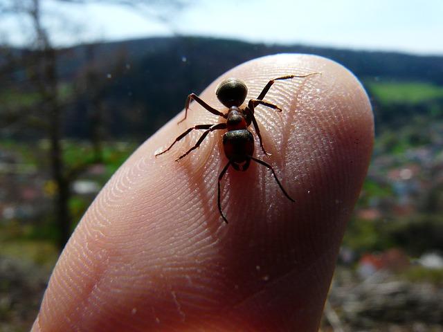 red-wood-ant-4398_640 La hormiga sin patas; la estrategia en RRHH